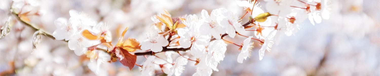 Combate la alergia primaveral con una dieta adecuada